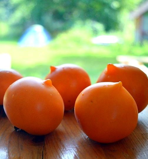 Dívčí prs - stará československá odrůda